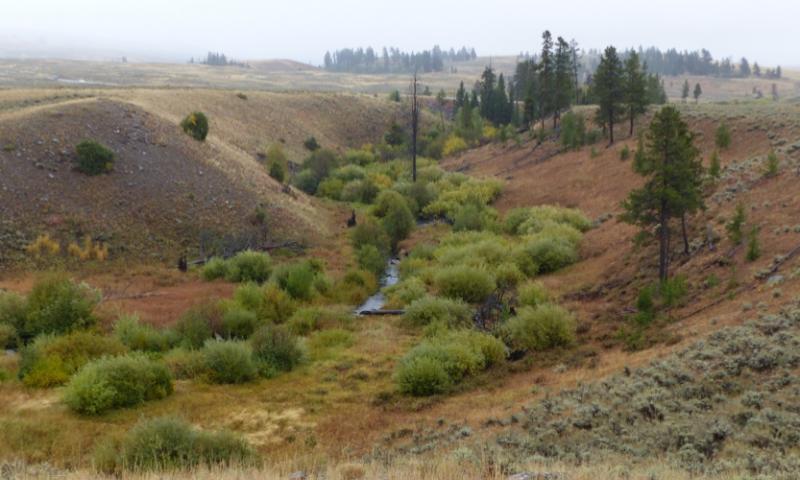Blacktail Deer Creek